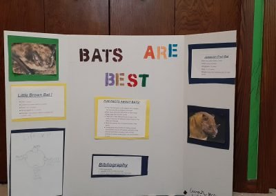 Bats are Best