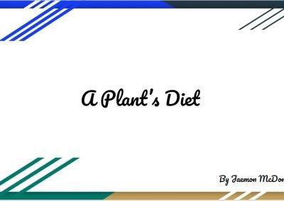 A Plant's Diet